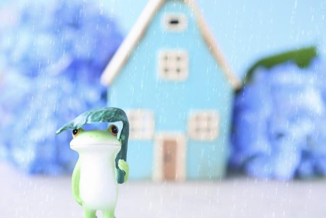 梅雨とカエル